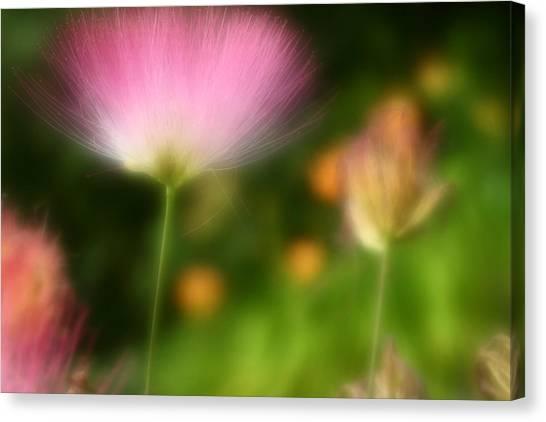 Mimosa Canvas Print - Dream Seeker by Michael Eingle