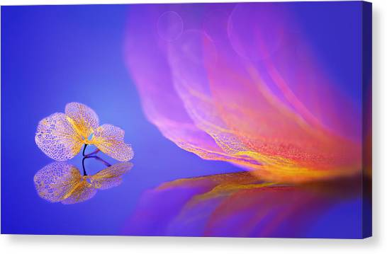 Dream Canvas Print by Sophie Pan