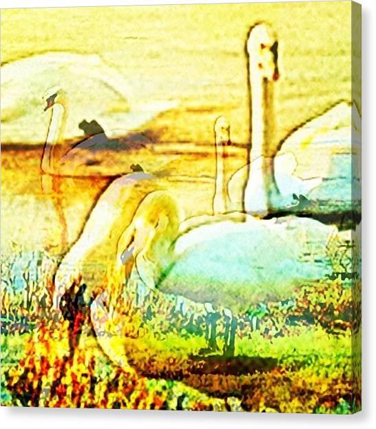 Ballet Canvas Print - Dreams Of Swans by Urbane Alien