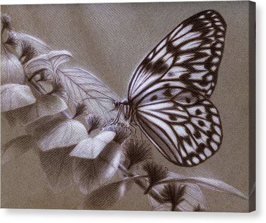 Dreams Sketch Canvas Print by Shawn Kawa