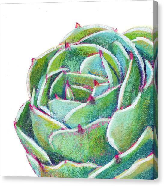 Succulent Canvas Print - Dreams To Come by Athena Mantle