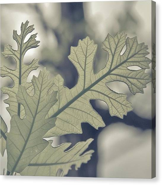 Dreamt Myself Astray | #spring #nature Canvas Print by Lotus Carroll
