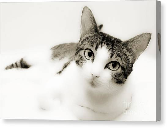 Dreamy Cat 2 Canvas Print