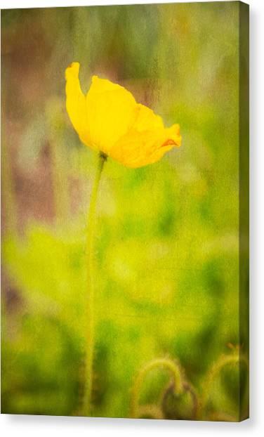 Poppys Canvas Print - Dreamy Impressions by Karol Livote