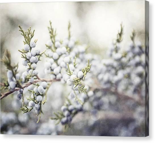 Dreamy Pastel Juniper Berries Canvas Print by Lisa Russo