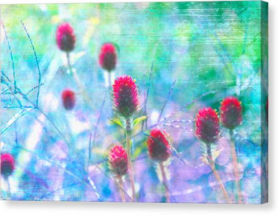 Dreamy Red Spiky Flowers 2 Canvas Print by Karen Stephenson