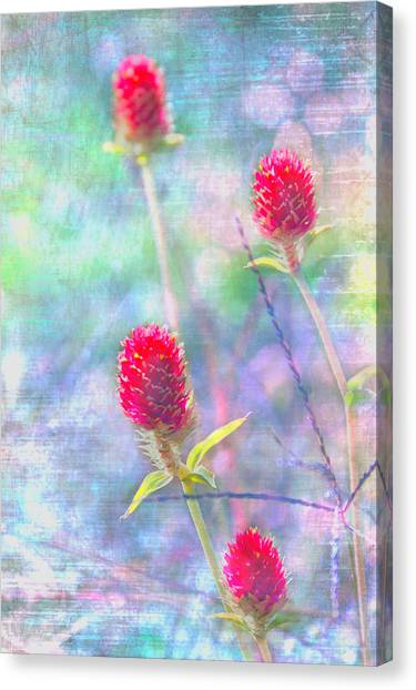 Dreamy Red Spiky Flowers Canvas Print by Karen Stephenson