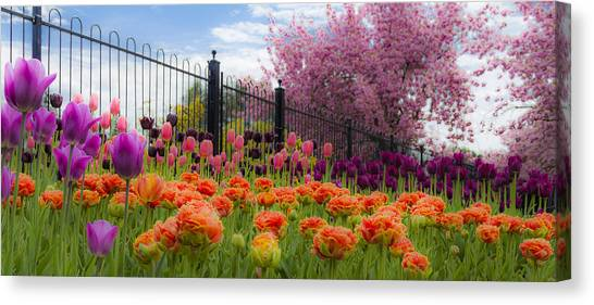 Dreamy Tulip Garden Canvas Print