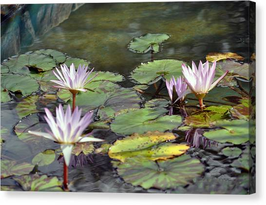 Dreamy  Water Lillies Canvas Print by Judith Russell-Tooth