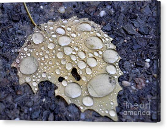 Drenched Leaf Canvas Print