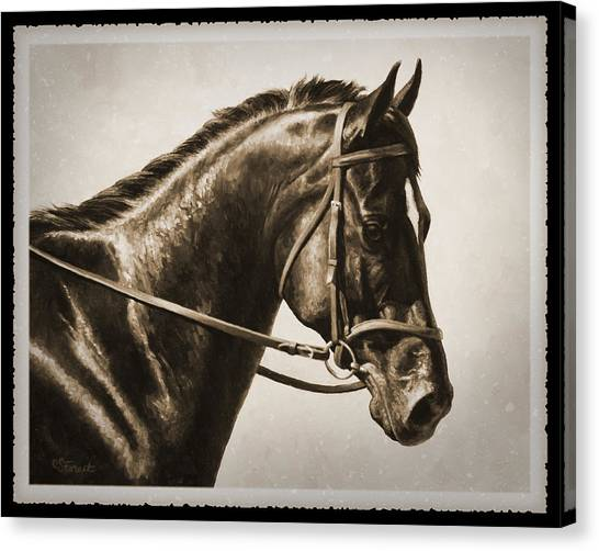 Bay Horse Canvas Print - Dressage Horse Old Photo Fx by Crista Forest