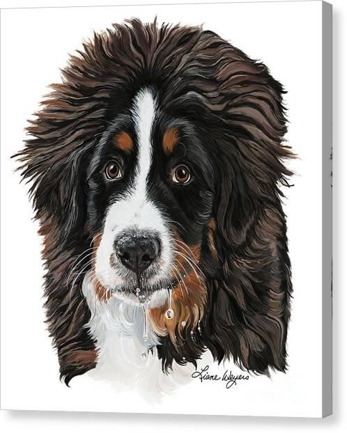 Bernese Mountain Dogs Canvas Print - Dribble by Liane Weyers