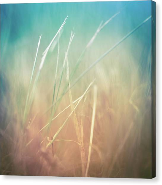 Blade Of Grass Canvas Print - Dried Grass - Close Up by Jeja