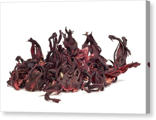 Sweet Tea Canvas Print - Dried Hibiscus Petals by Science Photo Library