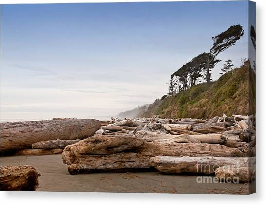 Drift Logs Tossed Like Pick-up Sticks Upon Pacific Coast Beach Canvas Print