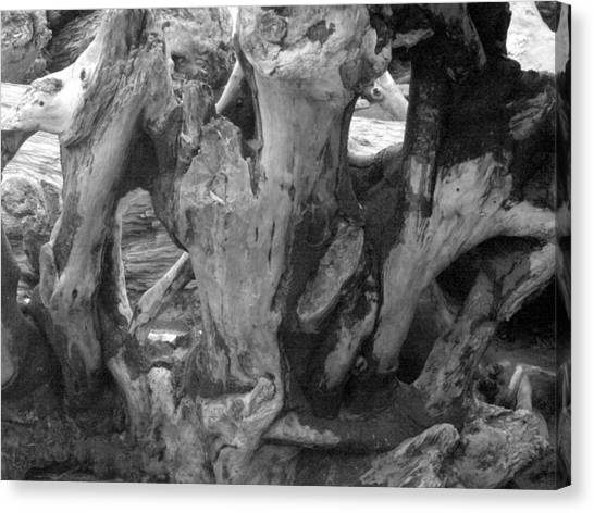 Drift Wood Cove Canvas Print