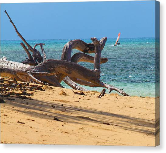 Canvas Print featuring the photograph Drift Wood by Debbie Cundy