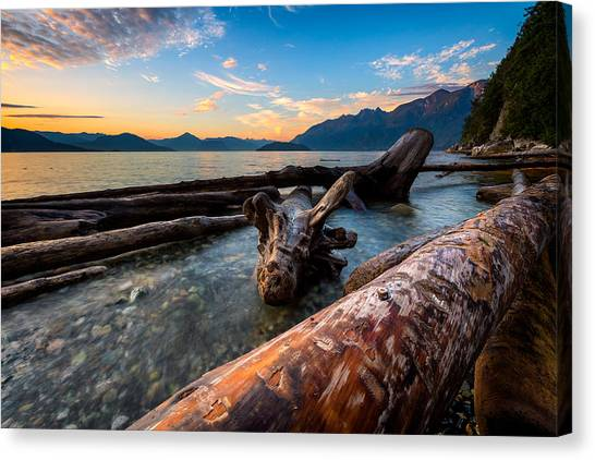 Vancouver Island Canvas Print - Driftwood by Alexis Birkill