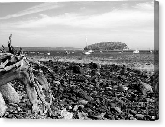 Driftwood And Harbor Canvas Print