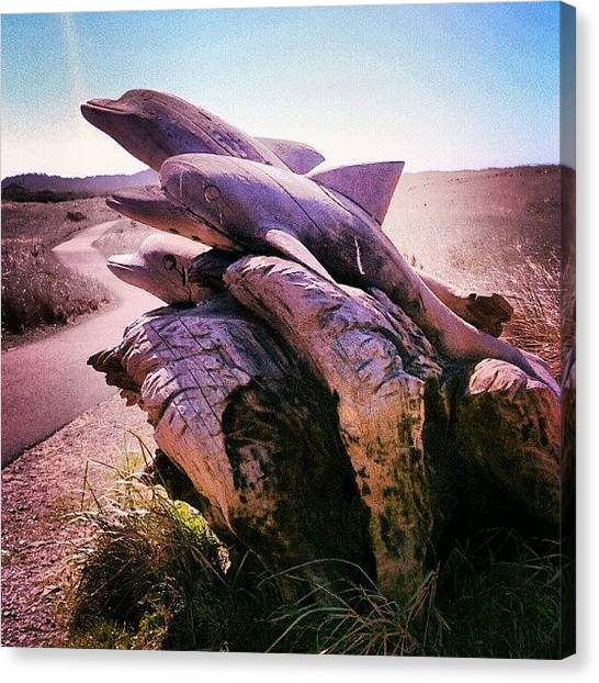Dolphins Canvas Print - #driftwood #art #dolphins by M R M