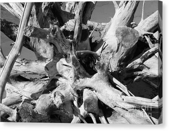 Timeworn Canvas Print - Driftwood by Barbara Bardzik