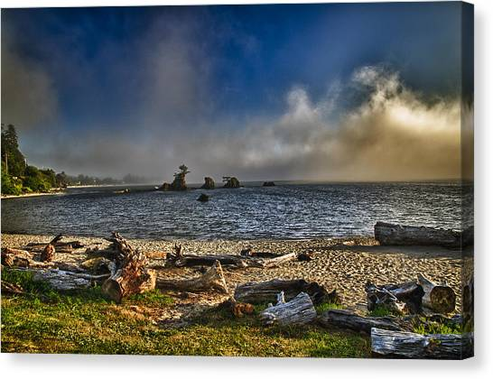 Driftwood Beach Canvas Print