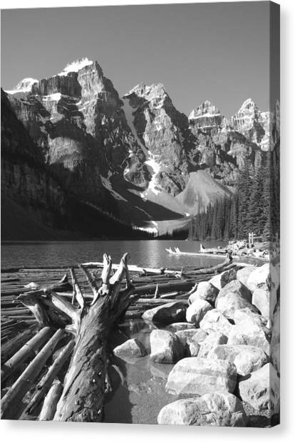 Driftwood - Black And White Canvas Print