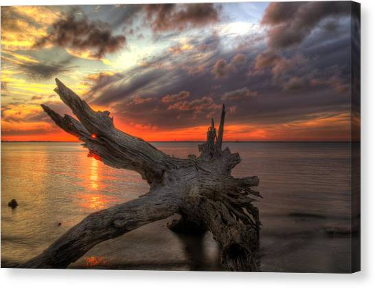 Driftwood Eye Of Fire Canvas Print
