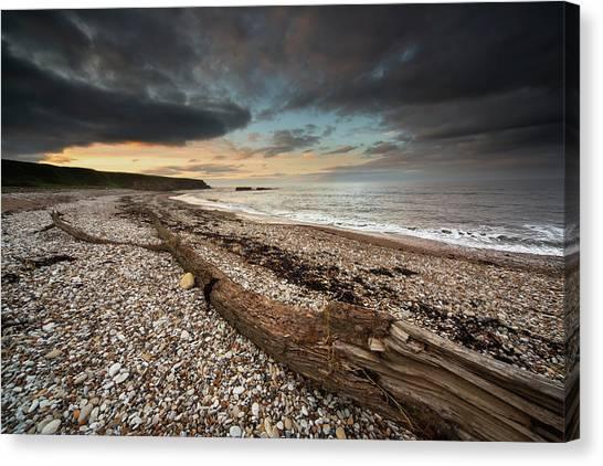 Sunderland Canvas Print - Driftwood Laying On The Gravel Beach by John Short / Design Pics