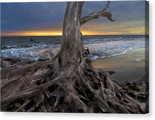 Driftwood On Jekyll Island Canvas Print