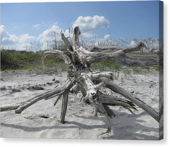 Driftwood Tree Canvas Print