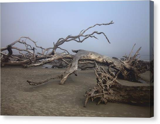 Driftwood Trees On Jekyll Island Canvas Print
