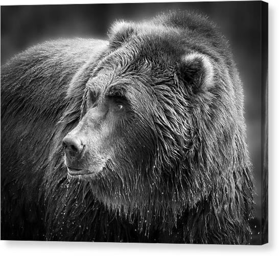 Drinking Grizzly Bear Black And White Canvas Print