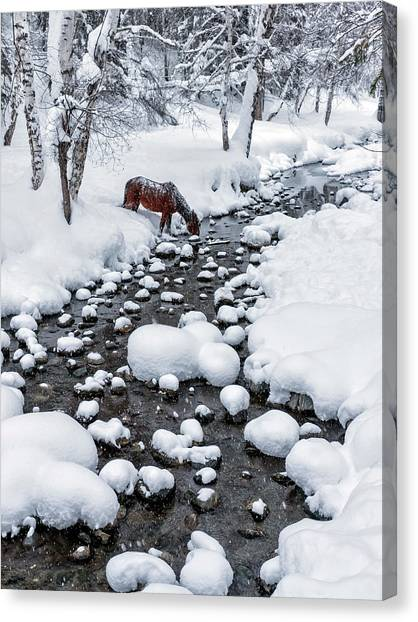 Drinking In Snow Canvas Print by Hua Zhu