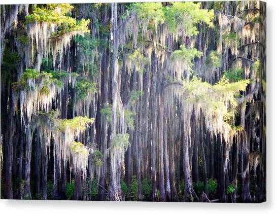 Dripping Moss Canvas Print