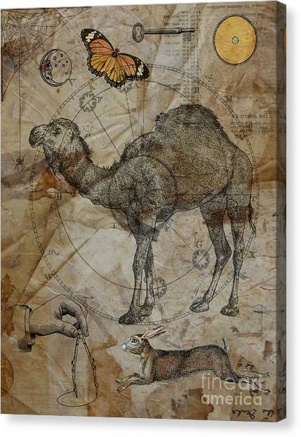 Dromedary Canvas Print by Judy Wood