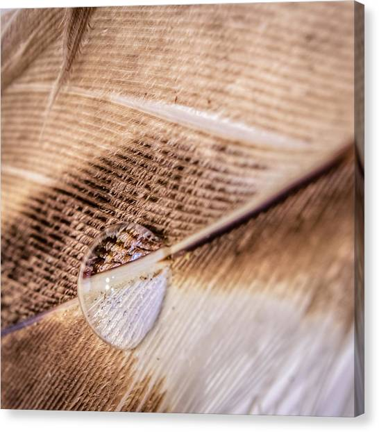 Droplet On A Quill Canvas Print