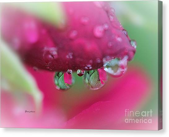 Droplets On The Rose Canvas Print