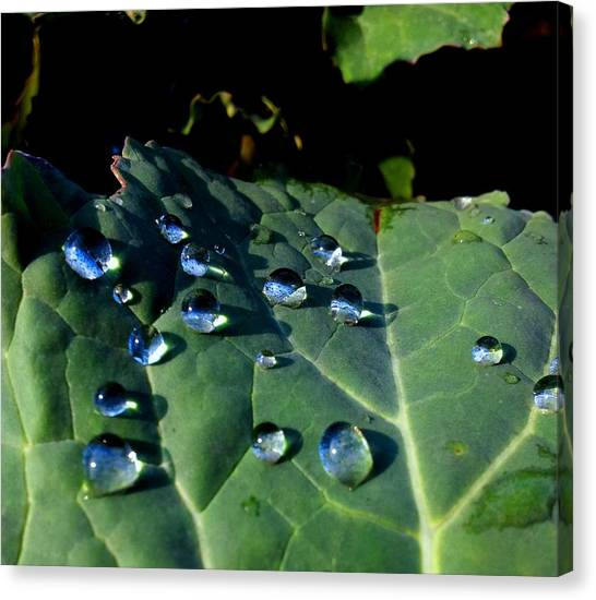 Drops On A Leaf Canvas Print by Claudia Cefali