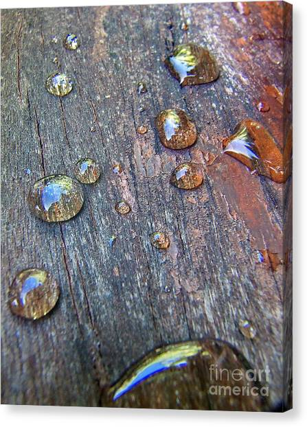 Drops On Wood Canvas Print