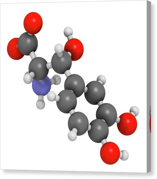 Droxidopa Hypotension Drug Molecule Canvas Print by Molekuul