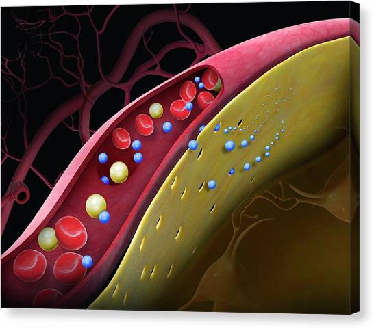 Drug Crossing The Blood-brain Barrier Canvas Print by Claus Lunau/science Photo Library
