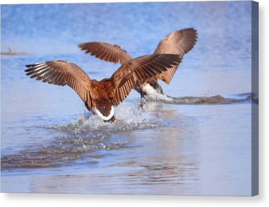 Dual Landing Canvas Print by Valarie Davis