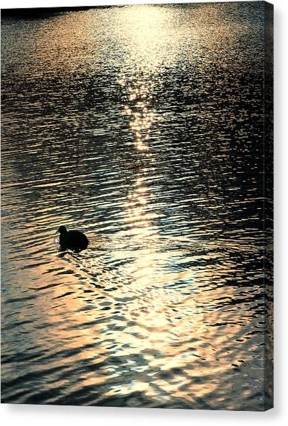 Duck At Sunset Canvas Print