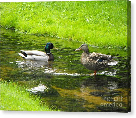 Duck Couple Canvas Print