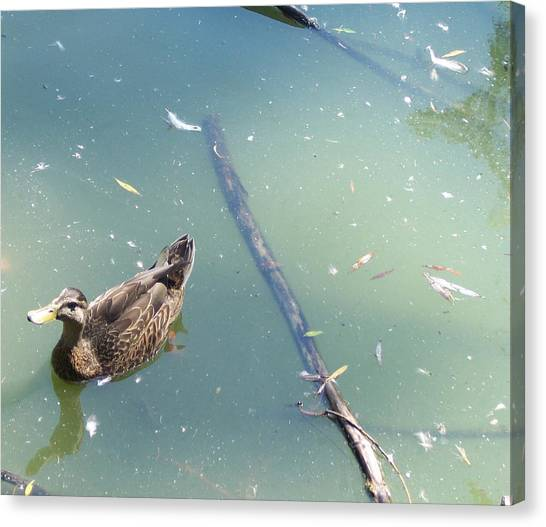 Duck In Pond Canvas Print