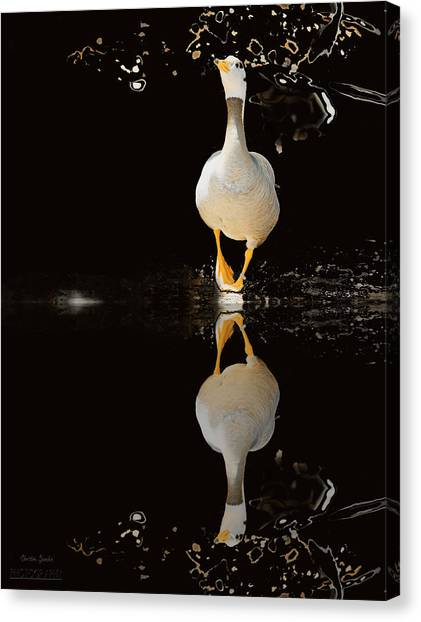 Duck On Stage Canvas Print