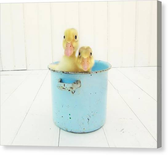 Duck Soup Canvas Print