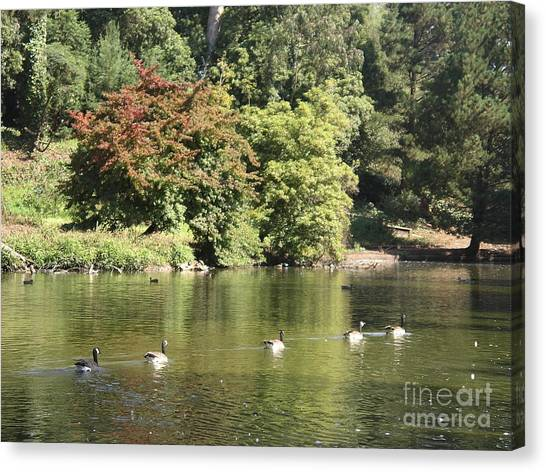 Geese In A Row Canvas Print