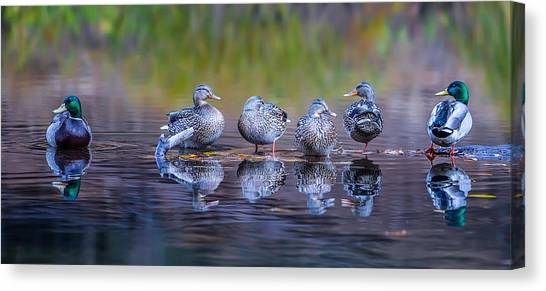 Ducks Canvas Print - Ducks In A Row by Larry Marshall